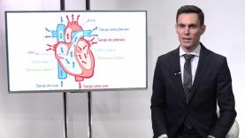 anatomia inimii